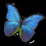 butterfly-250x250-ACP